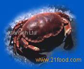 Crab - Cancer pagurus