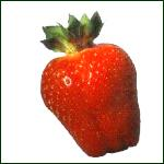 Strawberries Selva