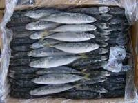 Frozen sea fish (A08)