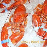 Whole Cooked Lobsters