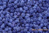 blueberry concentrate,fruit juice concentrate