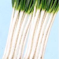 Chinese onion