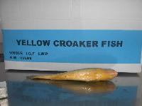 Yellow Croaker