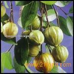 Garcinia Cambogia P. E.