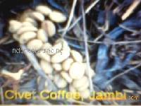 arabica Civet coffee