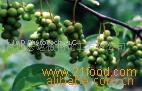 Schisandra chinensis PE