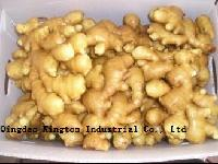Ginger (Fresh, Frozen, Dehydrated, Pickled)