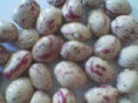 china origin kidney beans