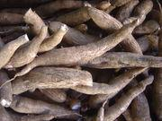 Raw Dried Cassava