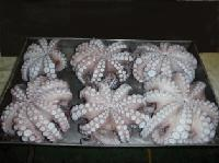 Octopus Flower