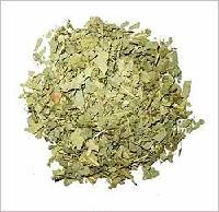 Eucalyptus Globulus Labill Leaf Pieces Tea