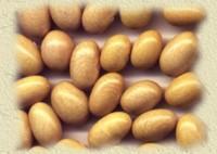 YELLOW BEAN ,canario bean,mayocoba