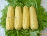 IQF sweet corn cobs