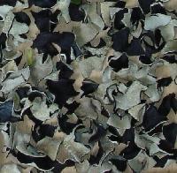 AD black fungus