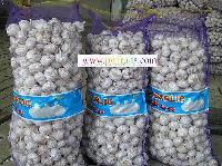 Sell Fresh Garlic