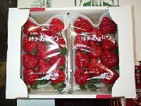 Japanese Amao Strawberry
