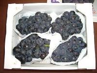 Japanese Pione Grape
