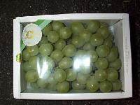 Japanese Muscat Grape