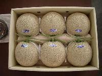 Japanese Musk Melon