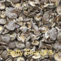 Dry Mushroom 7