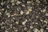 Dry Mushroom 9