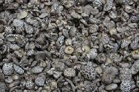 Dry Mushroom 10