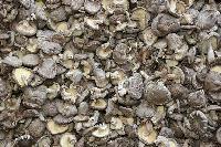 Dry Mushroom 11