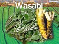 Frozen wasabi