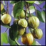 Garcinia Cambogia Extract - HCA
