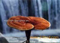 Ganoderma Lucidum (Reishi) Mycelium Extract and Polysaccharides and Spore Powder