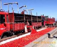 Turnkey Industrial Solution for Tomato paste line&equipment