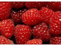 IQF wild raspberry