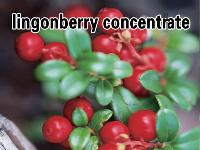 Lingonberry Concentrate