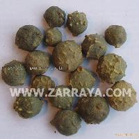 Gallnut Green