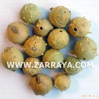 White Gallnut