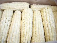 IQF waxy corn