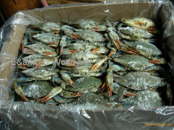 What Animals Prey on Blue Crabs?