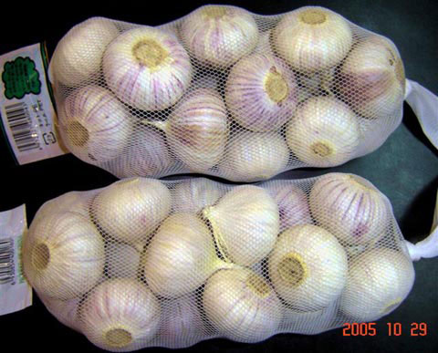 how to grow single clove garlic