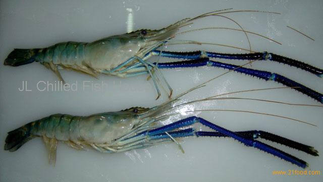 Fresh Water Prawn/Scampi